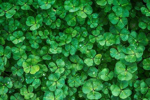 biostymulatory wzrostu roślin